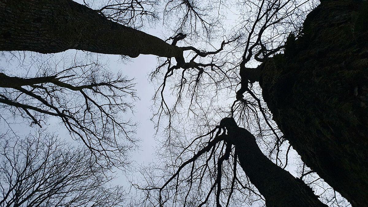 En av oppgavene var å ta bilder fra en uvant vinkel. Her har fotografen snudd kamera mot himmelen og får fin kontrast mellom trærne og skyene.