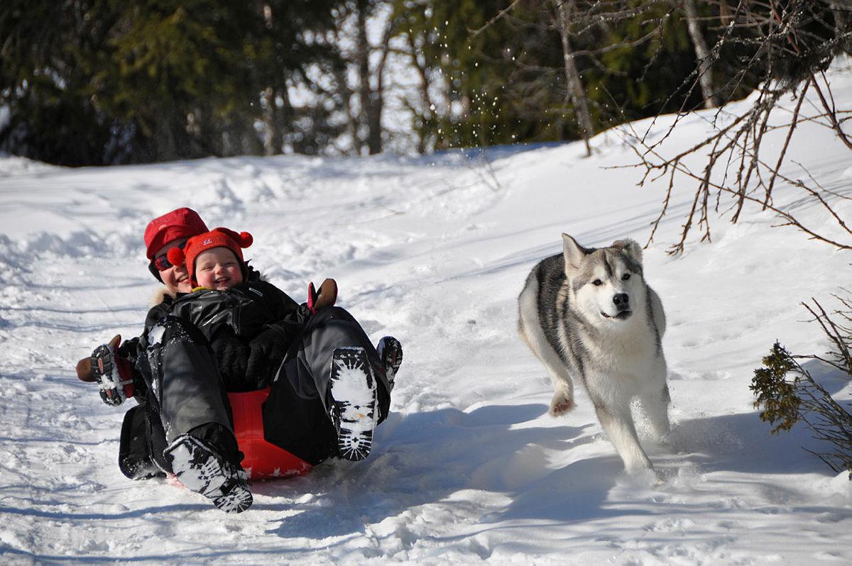 TOT's tips til vinterferien