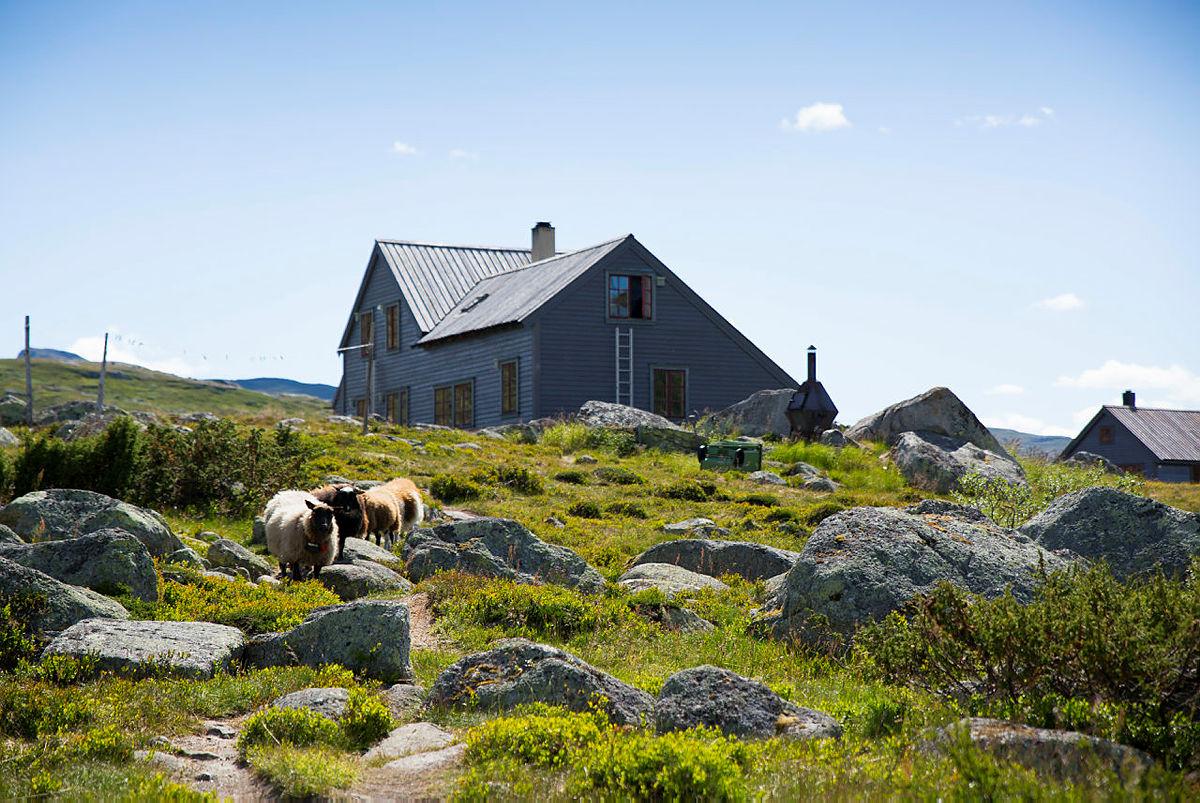 HADLASKAR: Hytta til Bergen og Hordaland Turlag er et viktig knutepunkt i rutenettet på Hardangervidda.