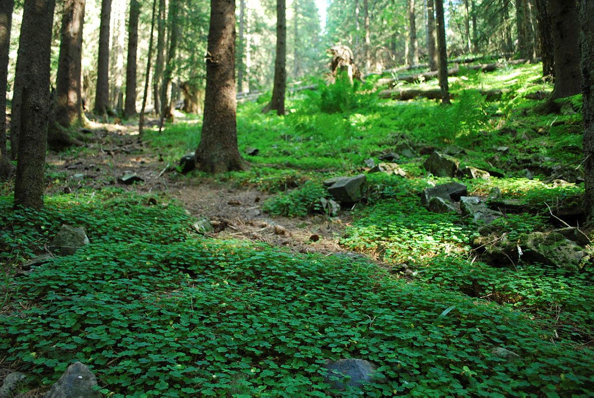 Ryddeuka 2019 - Bli med på vårrengjøring i skogen!