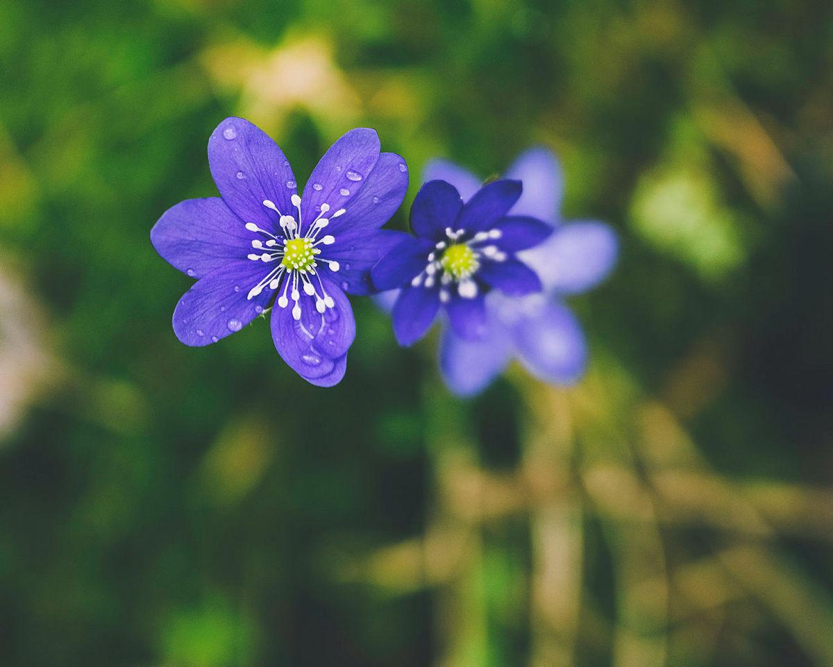 Blomstertur langs Elvestien gjennomført