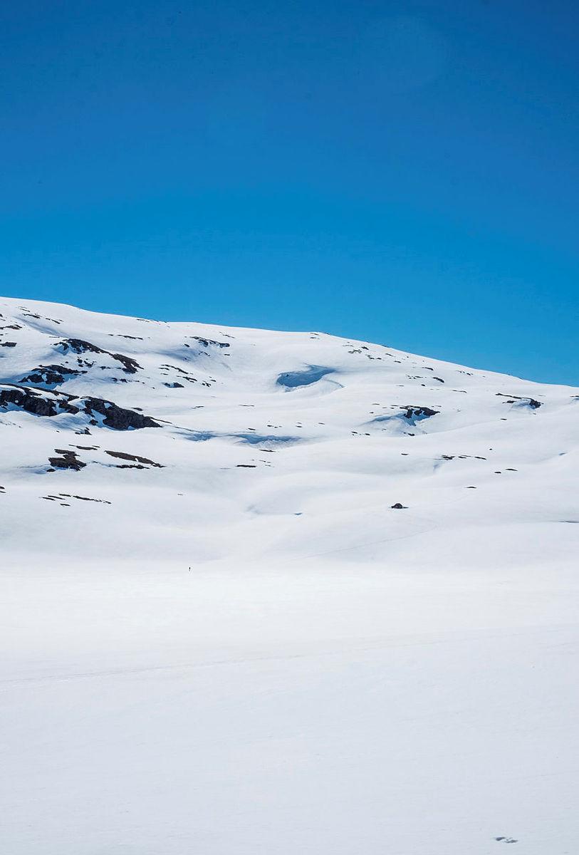 Enslig skiløper blir bitteliten i stort fjellandskap. Vårskitur, sommerskitur. Fra Sendedalen på Vikafjellet pinsen 2020.