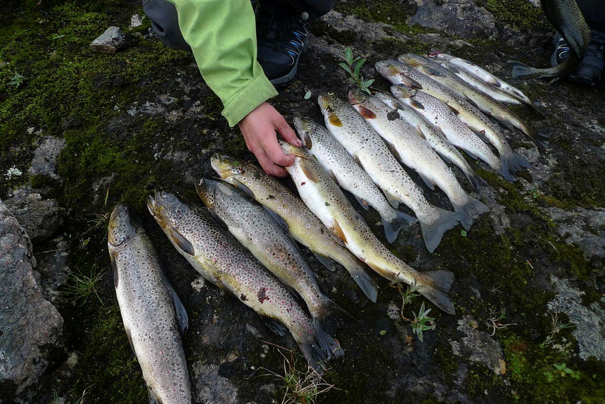 Godt fiske i Stavalivatn.