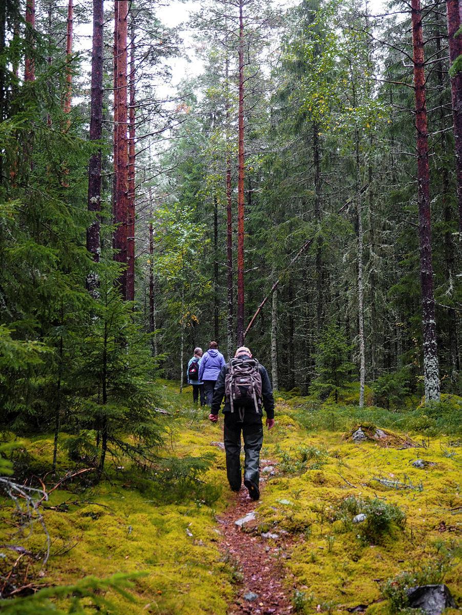 Finnskogrunden, langs denne ruta møter du norsk, svensk og skogfinsk kultur. Bilder fra åpningen i 2015.