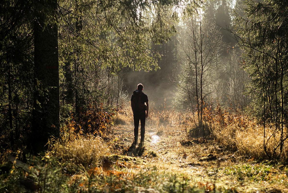 Stien er en viktig del av manges liv. Her fra Østmarka i Oslo.