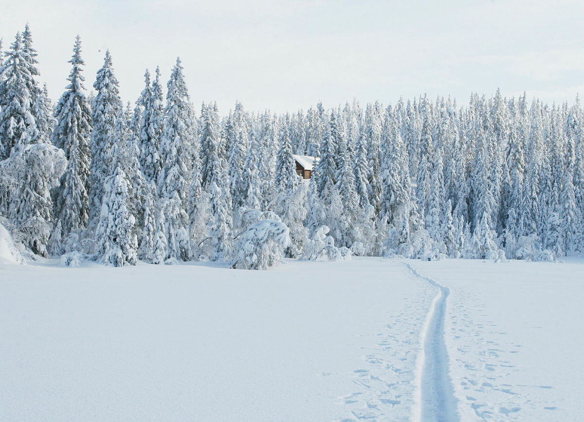 Sørmyrseter i vinterdrakt.