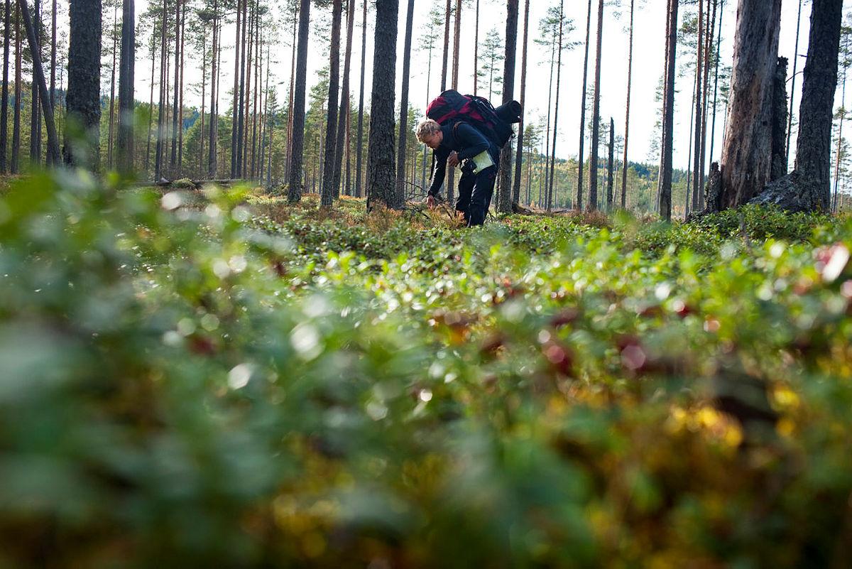 """Reportasjebilder til saken """"I flyktningenes fotspor"""", Fjell og Vidde nr 5, 2014."""