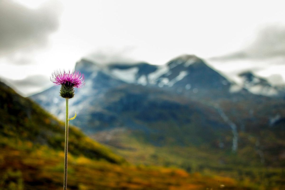 TAFJORDFJELLA: Et rikt stinett, høye fjell og fantastisk natur kjennetegner dette fjellområdet.