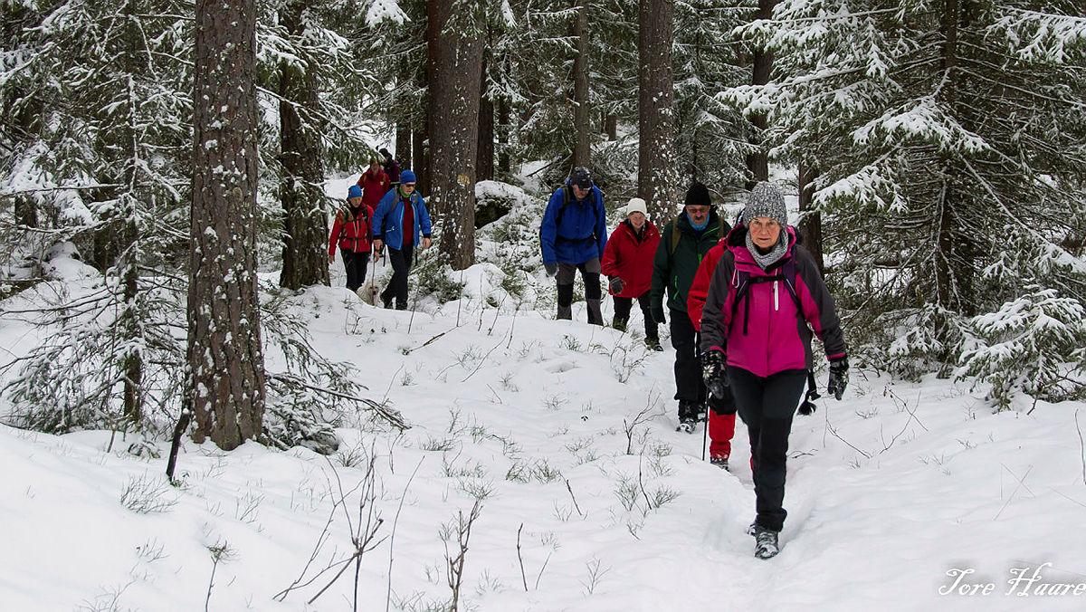 Turgruppa Ut på tur Eiker går Harakollen - Årbogen