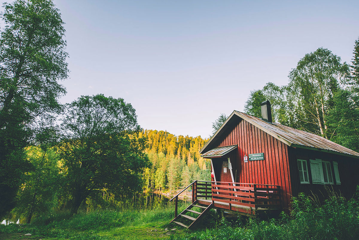 Røyrivannskoia i Østmarka.