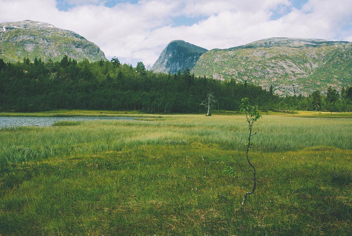 Monsen minutt for minutt. Etappene fra Skogadalsbøen til Vetti.