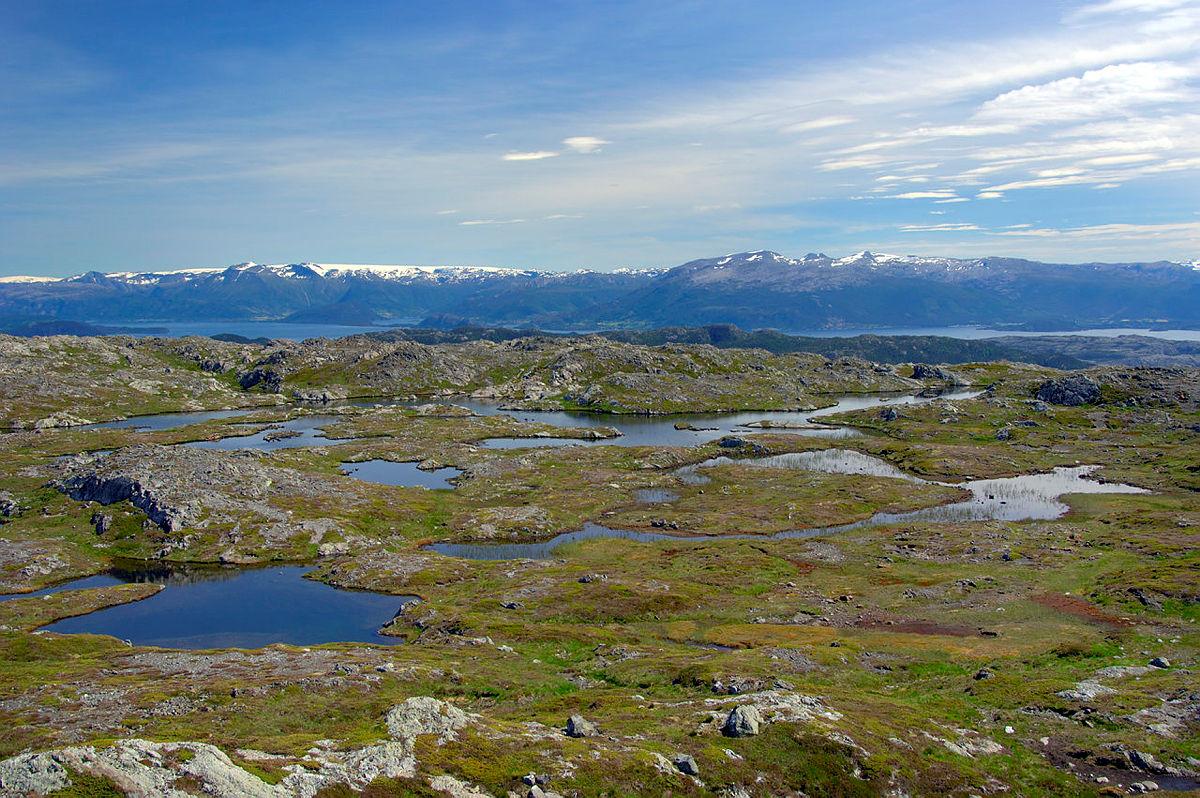 Det er et rikt plante- og dyreliv på Grønafjellet i Fitjar kommune.