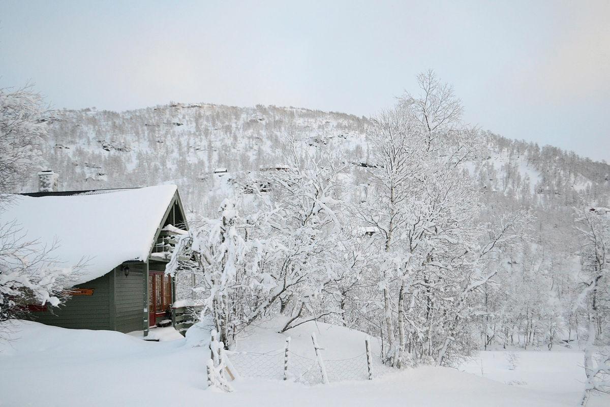 Jul og digg på Alexander Grieg hytta 2015