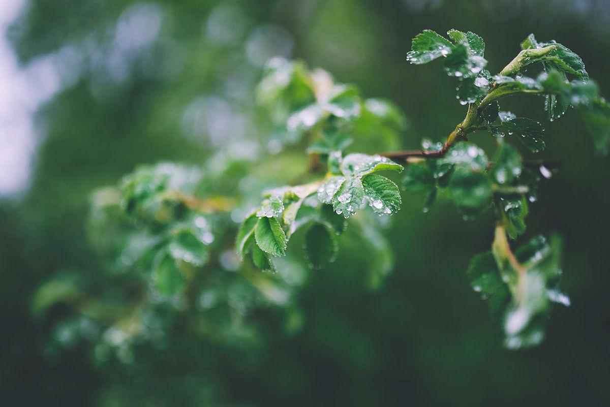 Ja til ekte grønn fredag