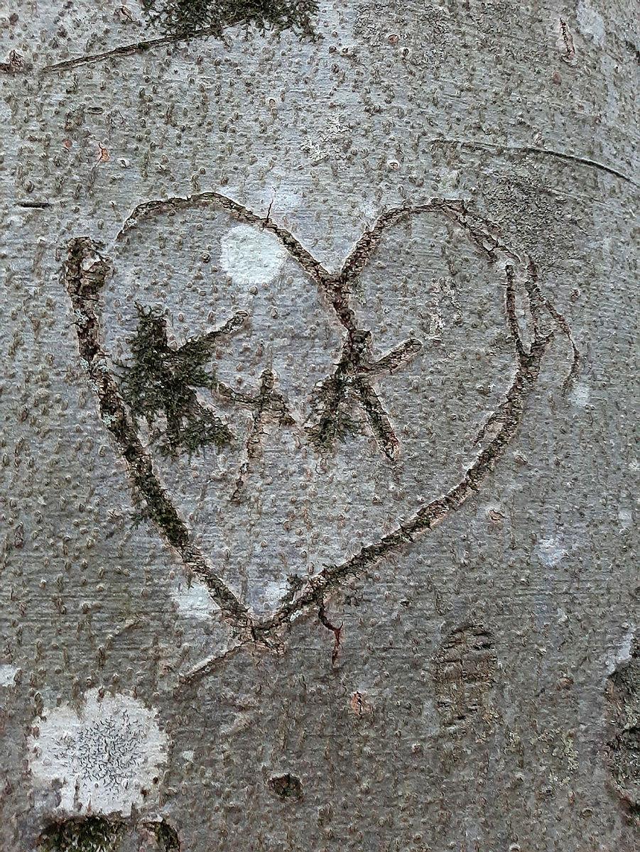 Nærbilder blir ofte spennende og interessante, og her har Åse gått tett innpå et tre og fanget denne kjærlighetserklæringen.