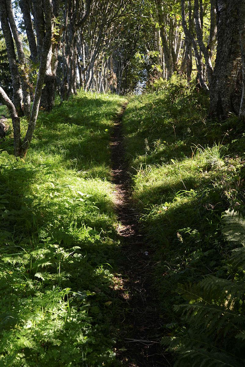 Hverdagsturene går vi gjerne på snarstier, i skogen, i nærmiljøet der vi bor.