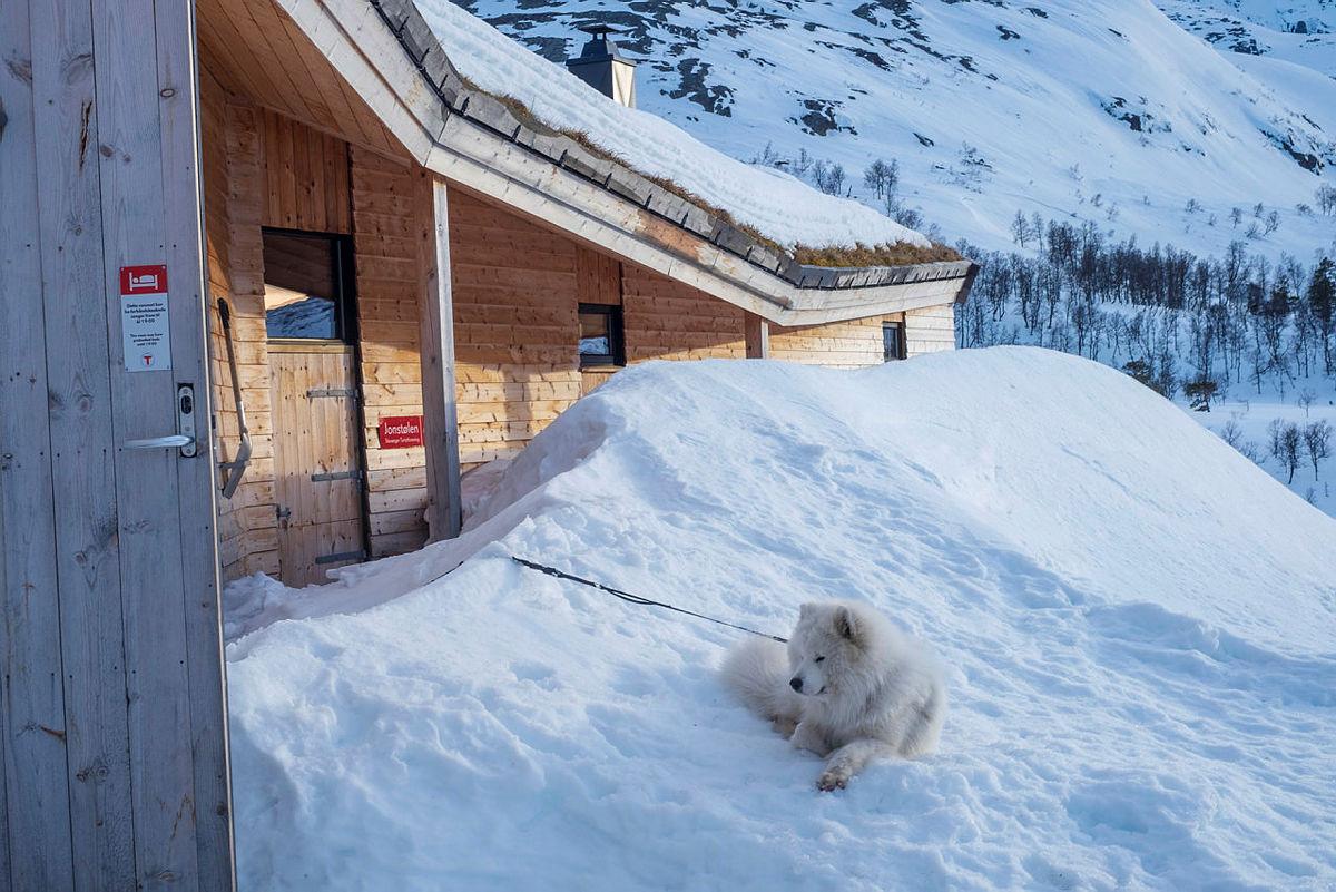 Jonstølen i Suldal med eget hunderom.