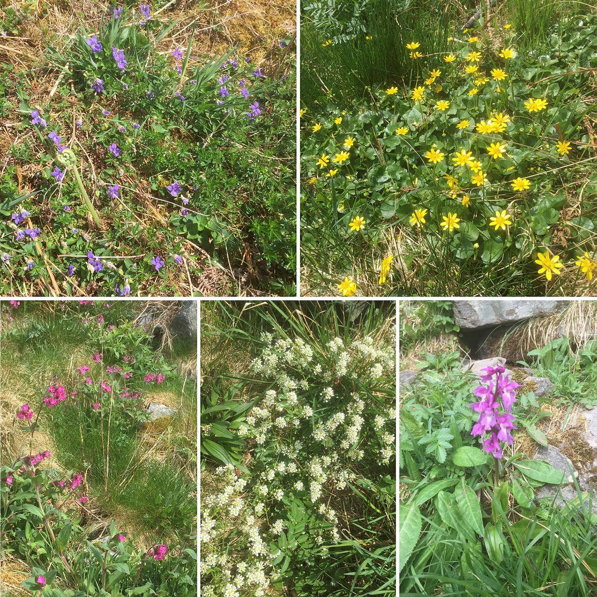 Litt av blomster floraen vi nyter synet av på turen.