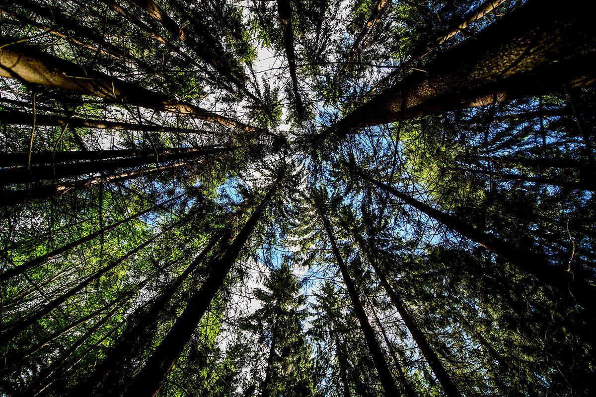 Med vårt ferskingkurs blir veien til skogen og fjellet enklere