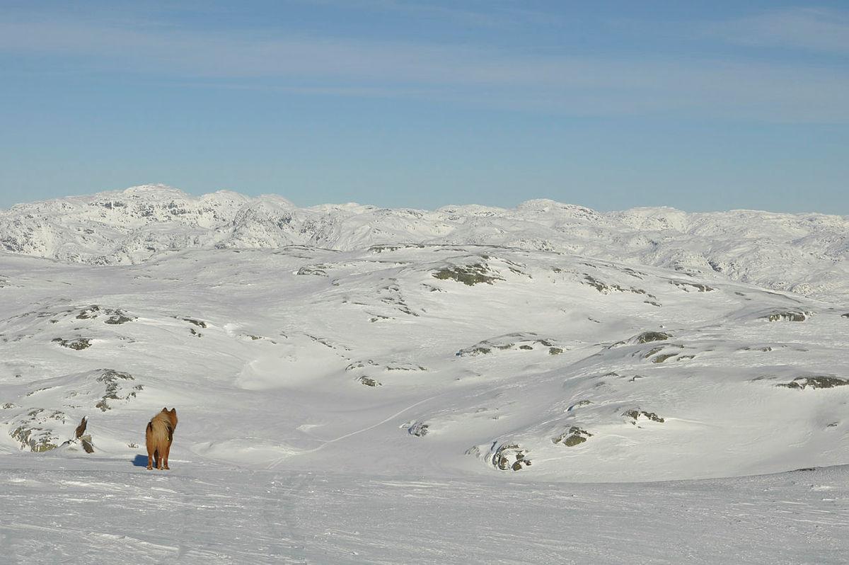 Tveitakvitingen, Kvamskogen, Vinteren 2017
