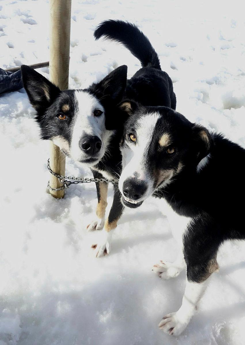 Hundekjøring i Luksefjell lørdag 16.3.19 med klart det går