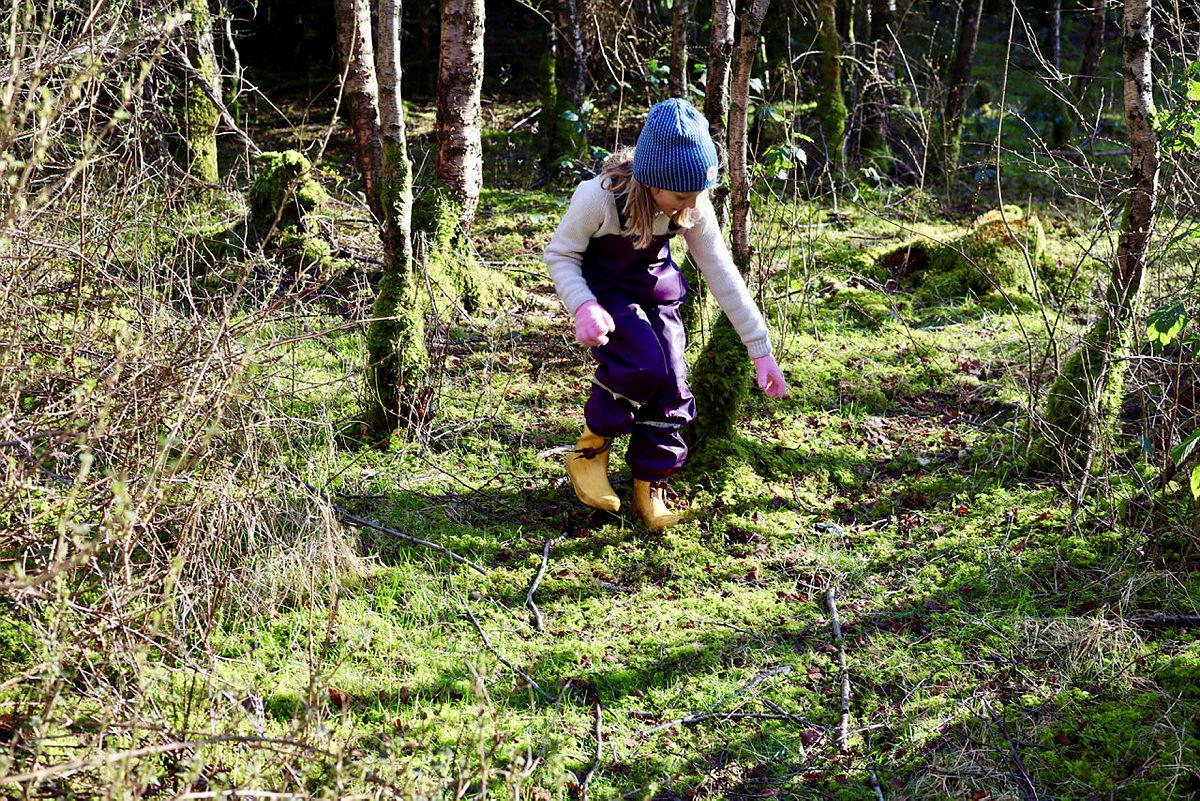 Let etter vårtegn i skogen!