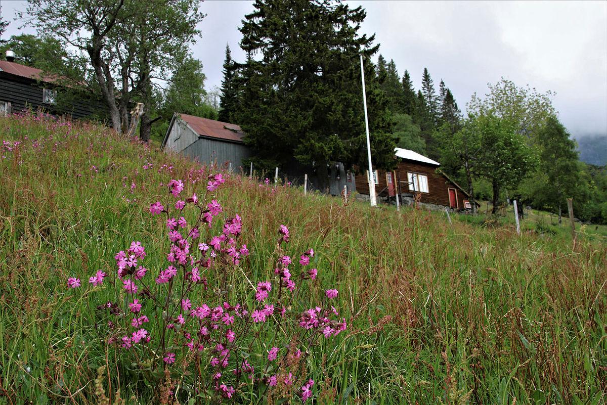 Sundagstur til Kjeåsen, 6. juni 2021.