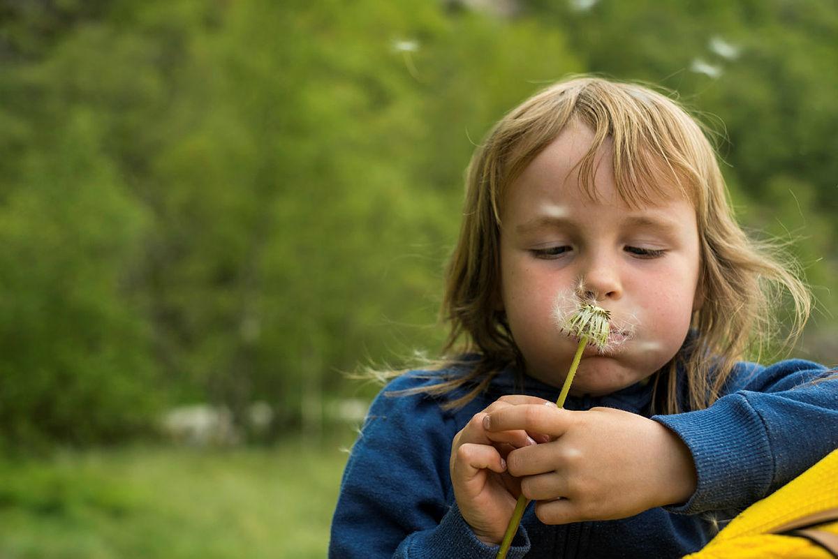 Utforsk både planter og insekter.