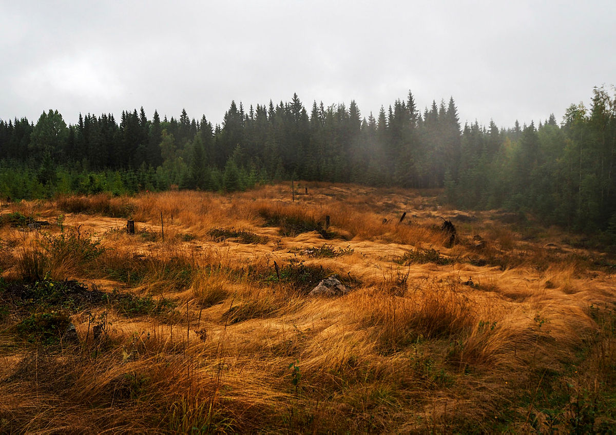 Finnskogrunden.