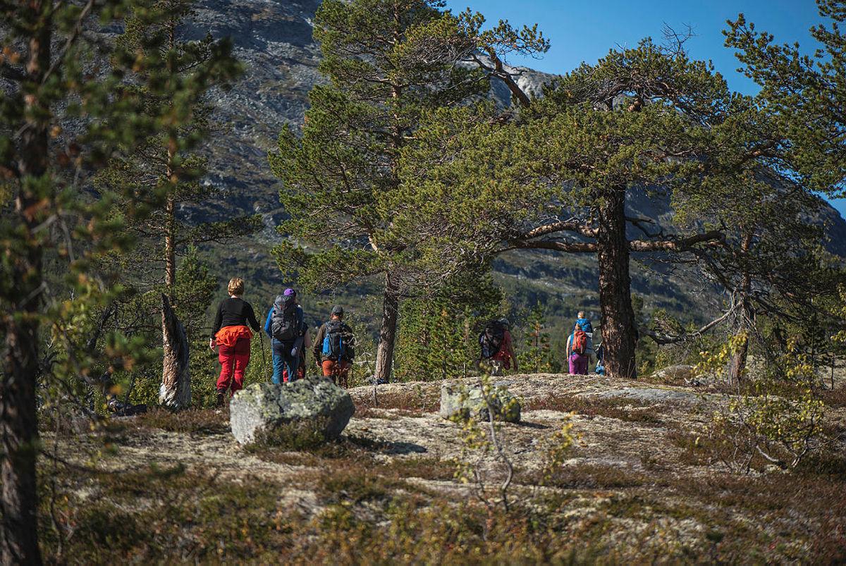 Idyllisk skog langs Røykjeskålvatnet.