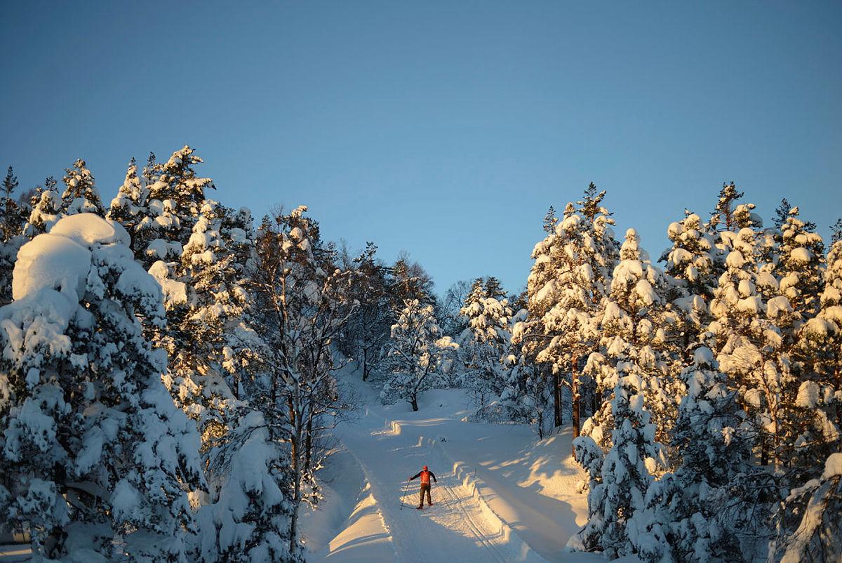 Totræna vinterpark i Samnanger.