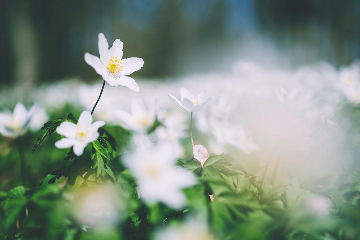 Bli med på Naturens dag