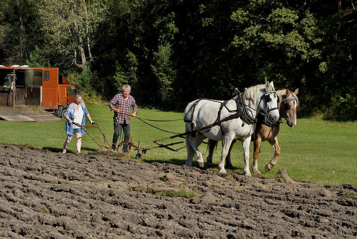 Noe byfolk sjelden gjør: Pløye med hest.