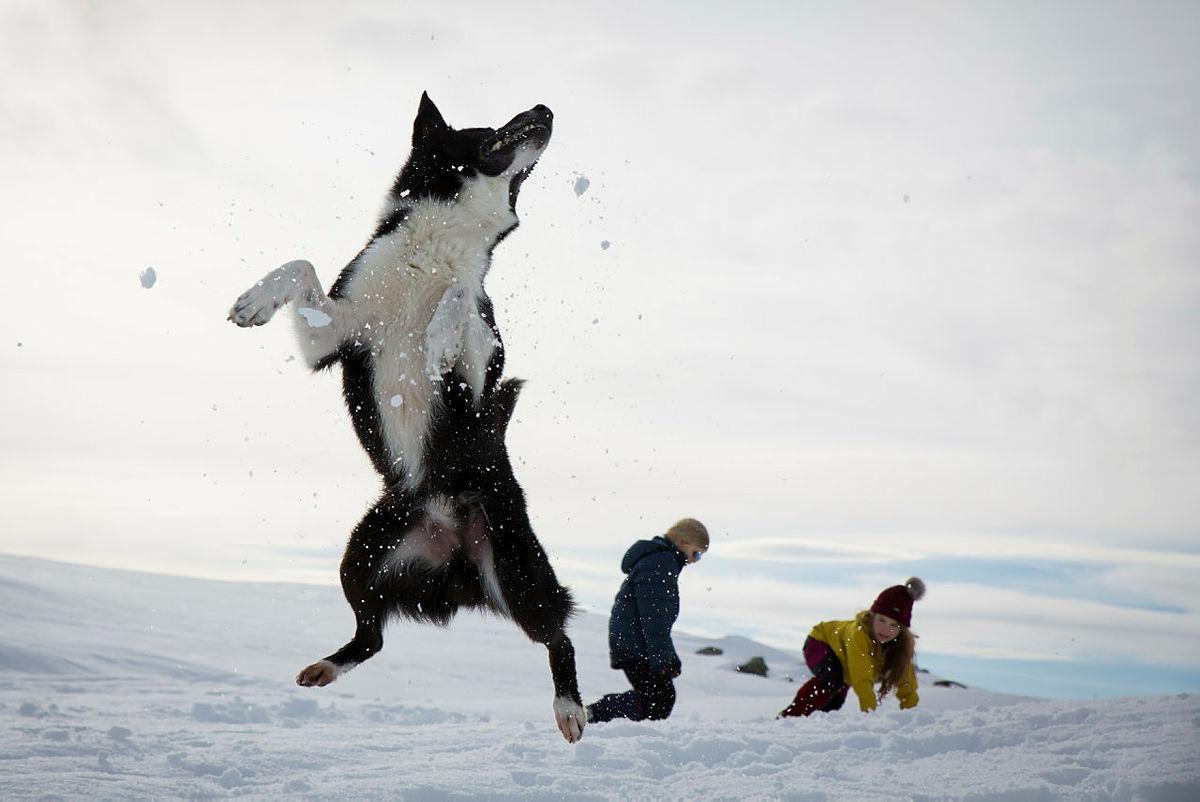 Nico flyr høyt når han skal fange en snøball i luften.