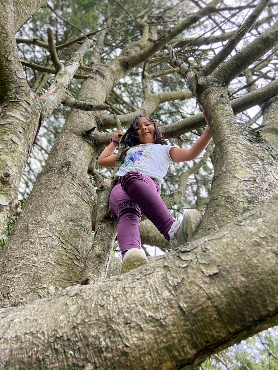 Klatre i trær