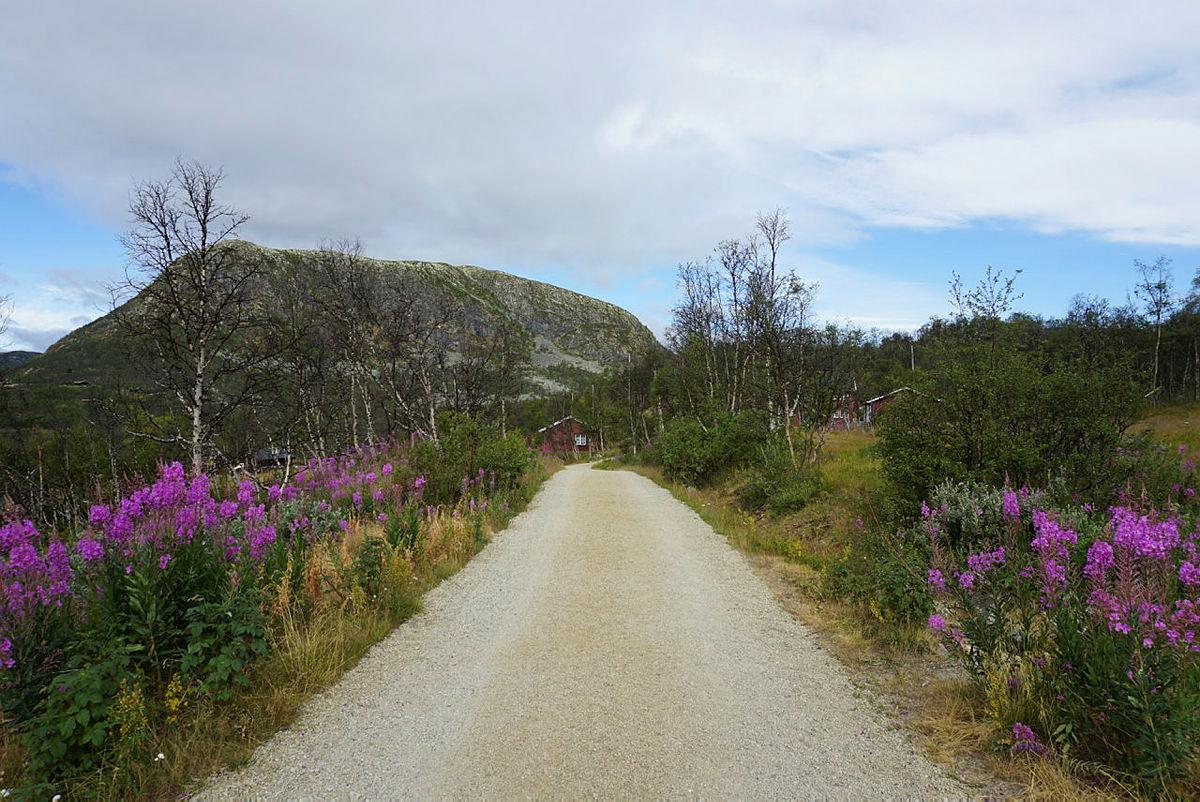 Her skimtes Mogen - fin grusvei helt fra ferjeleiet og inn til hytta.