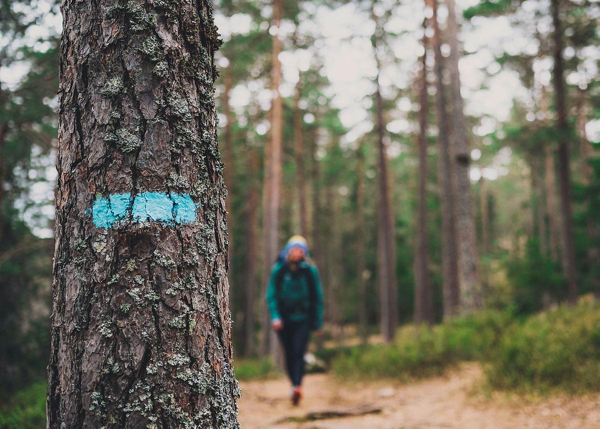 2500 km blåmerkete stier i skogene rundt Oslo er heldigvis åpne!